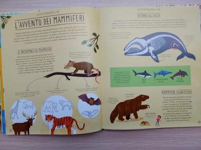 Meravigliosa evoluzione mammiferi