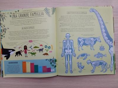 Meravigliosa evoluzione scheletri
