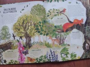 Dall'albero alla foresta